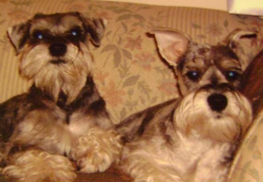 Dallas and Daisy